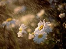 The Life Created by Rain Inside the Soul