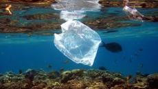 Green vs. Plastic