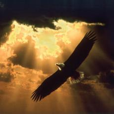 ::::::: On Eagle's wingS :::::::