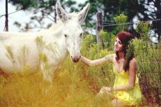 A Donkey Of The Farmers Daughter