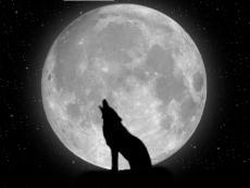 Day-Wolf