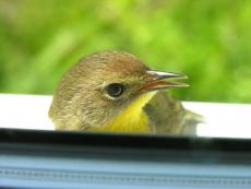 A Reflection on Birds