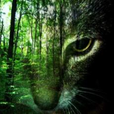 Our Promises with Cat and the Hunter