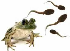 Tadpoles and Squashed Frogs