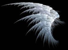 An Angel's Wings