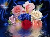 A Cinderella named Rose