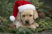 A CHRISTMAS SNOG