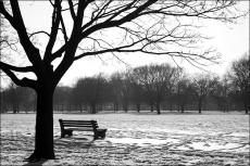 The park bench.!