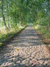 The Stone Cobble Road