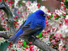 Oh Little Bird