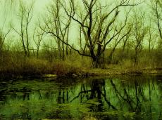 Secrets of the Bog