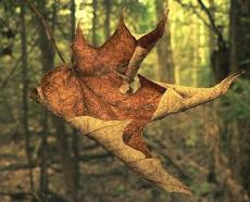 of wayward souls and falling leaves