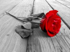 A Letter For A Withered Rose