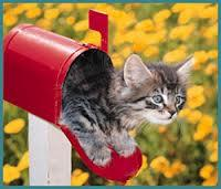 WHEN CATS DELIVER MAIL