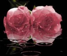 Showering Love (Haiku)