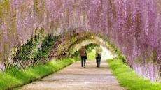 Spring (Haiku)*