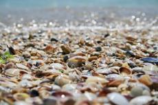 Seashells (Mental Notes)