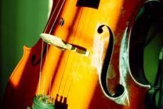 Golden Cello :part 2 protecter