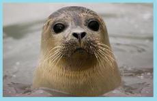 The Seals Wont Mind