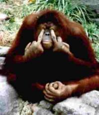 Jungle Monkey Chasing Island