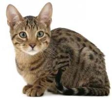 My Immortal Pet Cat