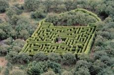 Life is the longest maze of all