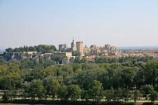 A tree grows in Avignon
