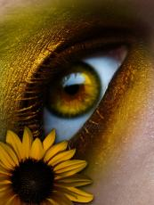 Sunflower and Moon