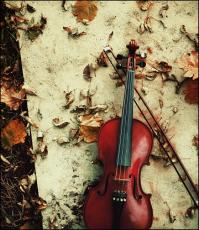 The Violinist....