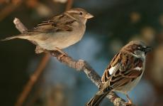 The Sparrows by Emad A. Ghani.