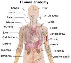 Human or Animal.