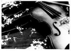 My Lovely Violin