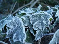 A Frosty Run