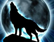 Wolf Awaits