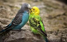 The Bird that Gave her Heart Away