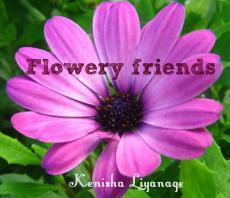 Flowery friends