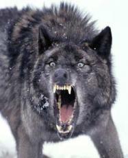 The Bramford wolf