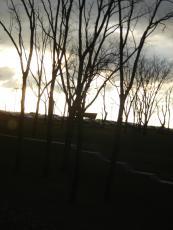 Darkest of Willows
