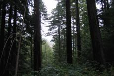 The unfortunate story of Verminir forest