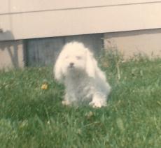 A Dog Named Fifi