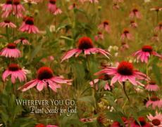 Gods Little Flowers