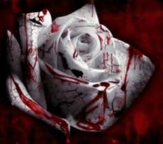 Vampire Rose Academy