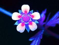 Glowing Flower