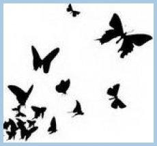 My Butterfly Shadows
