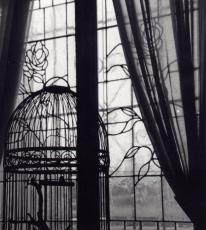 Set this Caged Girl Free