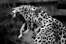A Breath Of Leopard Print.