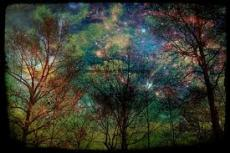 The Forest At Night..