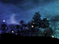 Silence and fireflies