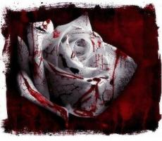 The Winner of the Bloody Rose