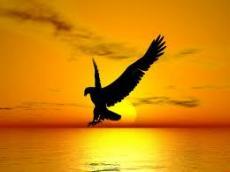 Leaving Freedom
